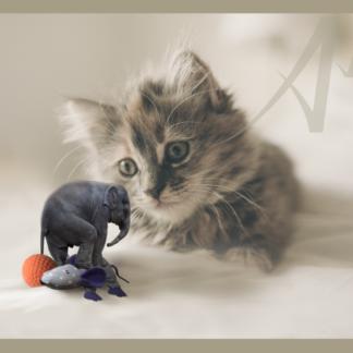 Kitten, Baby Elephant